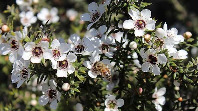 Loai mat ong thu hoach bang may bay, gia ca chuc trieu/kg-Hinh-3