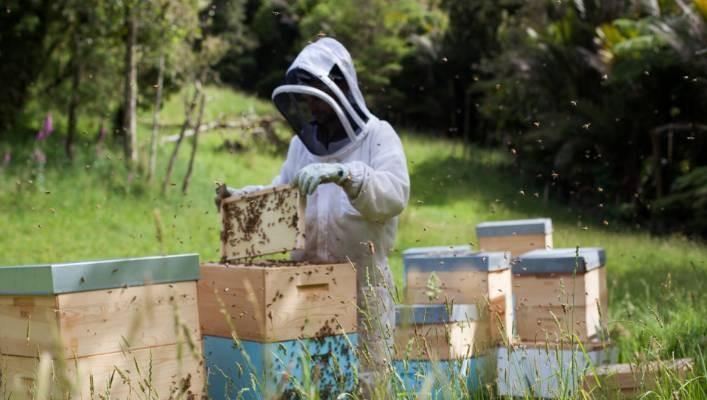 Loai mat ong thu hoach bang may bay, gia ca chuc trieu/kg-Hinh-7