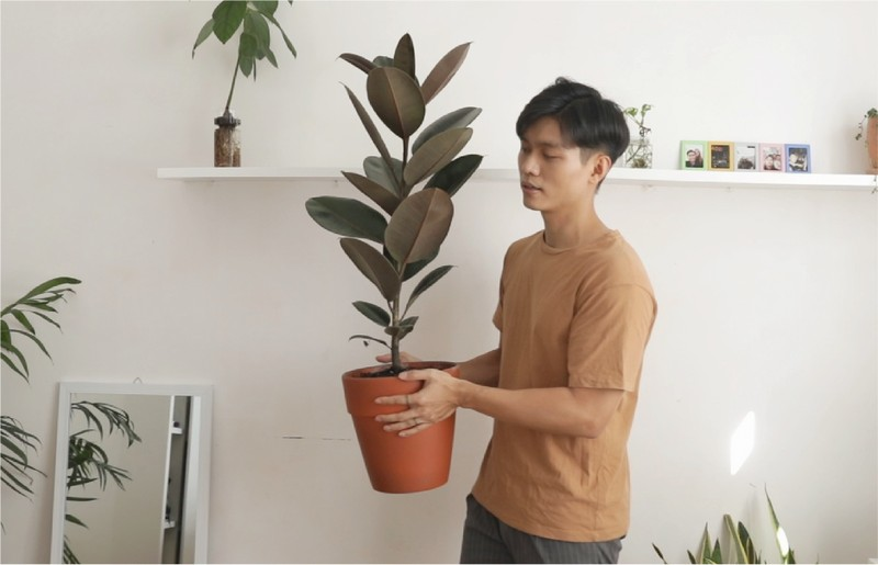 Don dep va phu xanh ban cong 4 m2 khi gian cach-Hinh-3