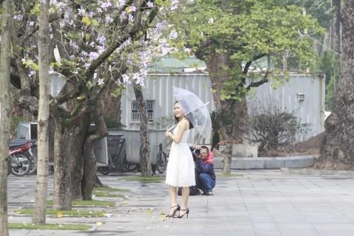 Hoa ban tim khoe sac xuan giua long Thu do Ha Noi-Hinh-11