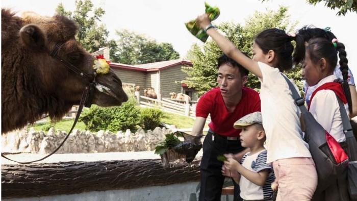 Loạt ảnh hiếm về cảnh 'ăn chơi' hằng ngày ở Triều Tiên - Ảnh 6