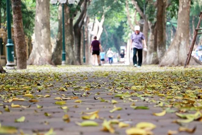 Thoi tiet ngay 14/3: Bac Bo chuyen lanh, Trung Bo co the xay ra loc