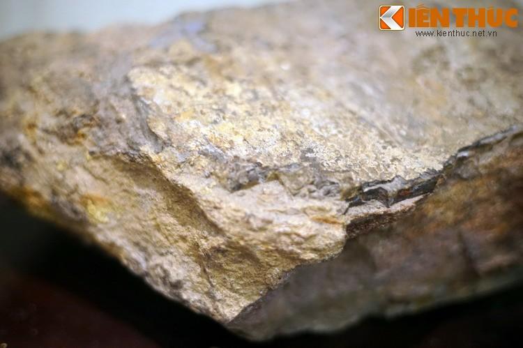 Can canh hoa thach khung long thu thiet giua Ha Noi-Hinh-10