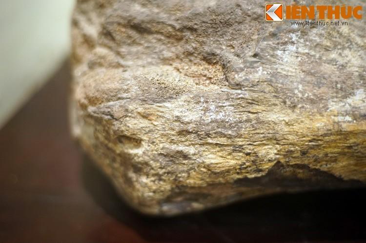 Can canh hoa thach khung long thu thiet giua Ha Noi-Hinh-11