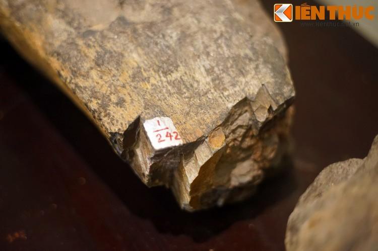 Can canh hoa thach khung long thu thiet giua Ha Noi-Hinh-12