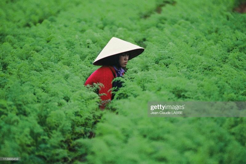 Ngam loat anh sieu hiem sieu doc ve Da Lat nam 1994-Hinh-4