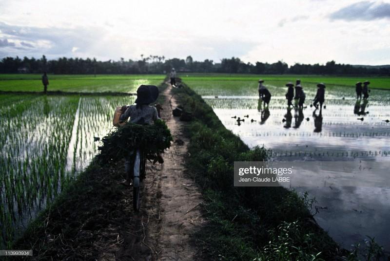 Boi hoi nhin lai cuoc song o nong thon Viet Nam dau thap nien 1990-Hinh-11