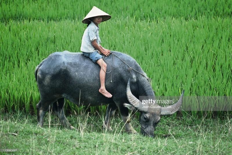 Boi hoi nhin lai cuoc song o nong thon Viet Nam dau thap nien 1990-Hinh-12