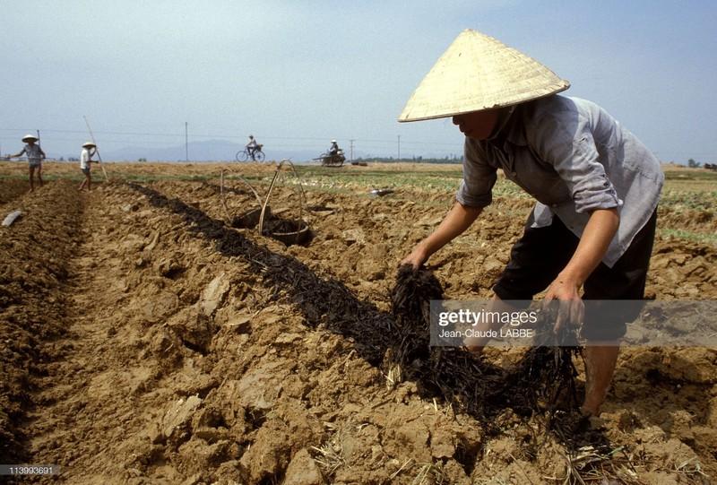 Boi hoi nhin lai cuoc song o nong thon Viet Nam dau thap nien 1990-Hinh-13