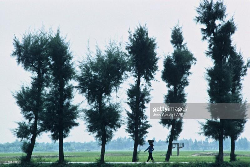 Boi hoi nhin lai cuoc song o nong thon Viet Nam dau thap nien 1990-Hinh-15
