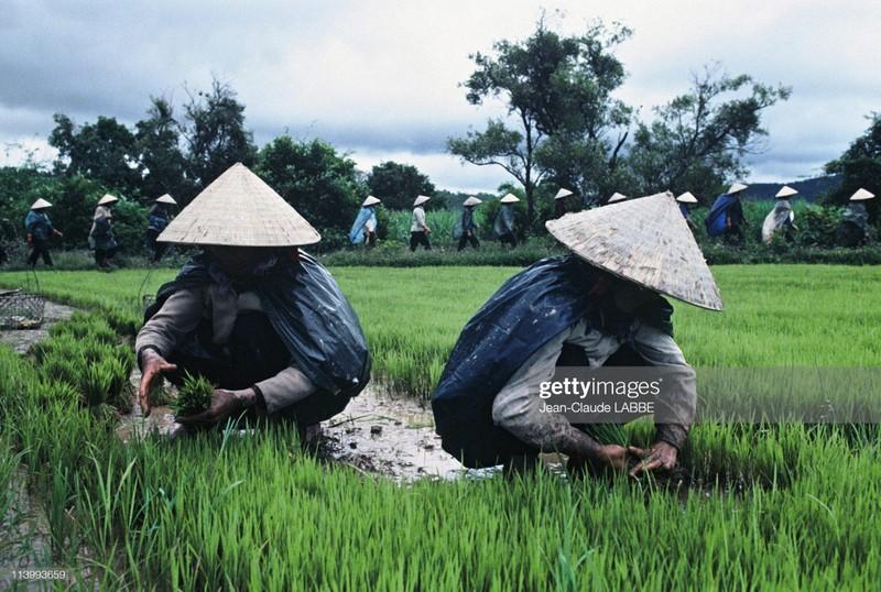 Boi hoi nhin lai cuoc song o nong thon Viet Nam dau thap nien 1990-Hinh-9