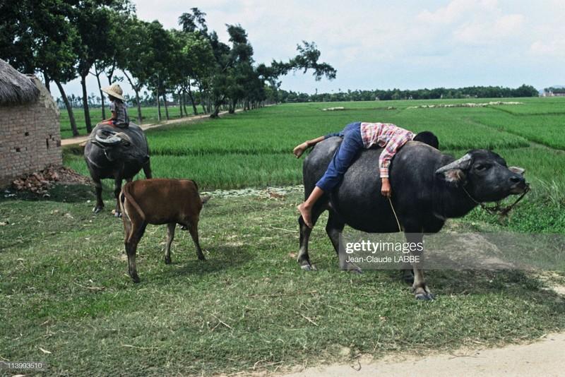 Boi hoi nhin lai cuoc song o nong thon Viet Nam dau thap nien 1990