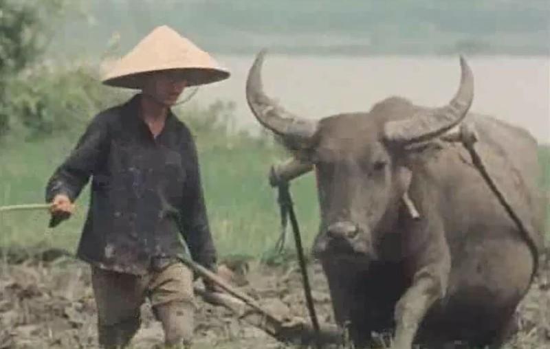 Viet Nam sau chien tranh the nao?-Hinh-3