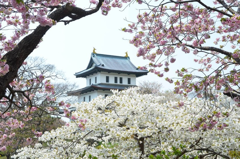 Vi sao nguoi Nhat Ban goi hoa anh dao la Sakura?-Hinh-6