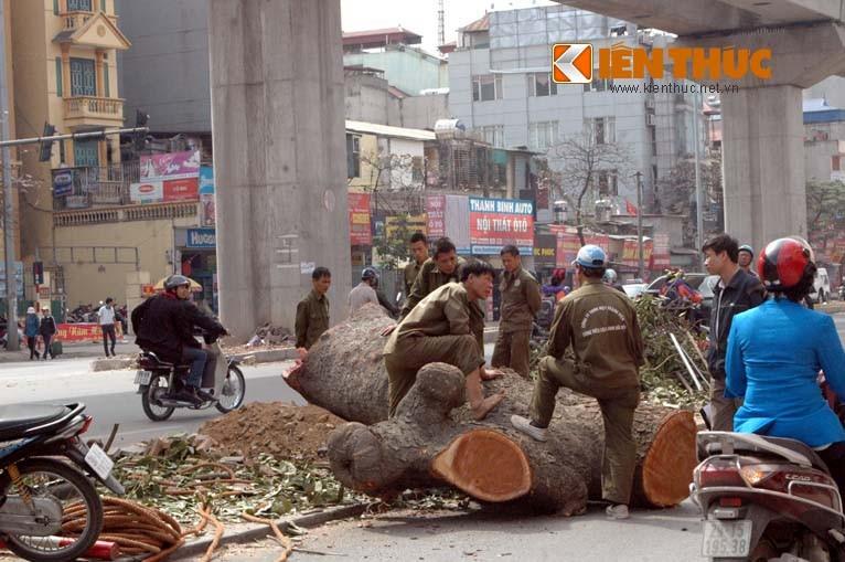 Du luan phan ung manh, Ha Noi chinh thuc dung chat cay xanh