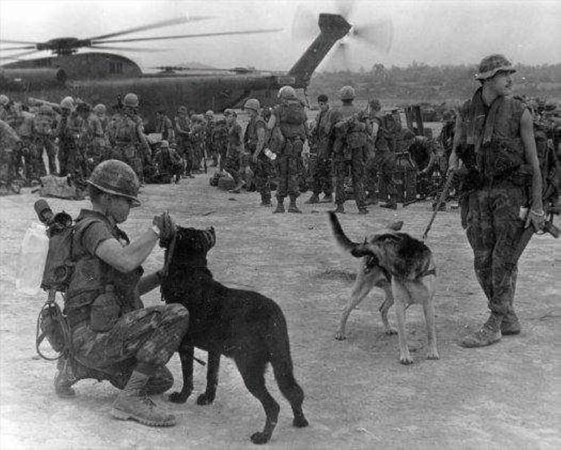 Ly giai viec cho quan su cua My chet nhu nga ra o Viet Nam-Hinh-11