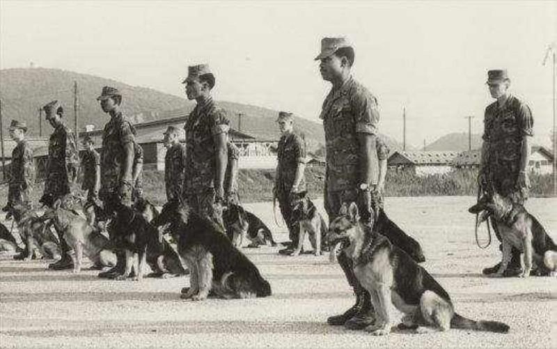 Ly giai viec cho quan su cua My chet nhu nga ra o Viet Nam-Hinh-6