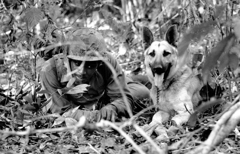 Ly giai viec cho quan su cua My chet nhu nga ra o Viet Nam-Hinh-8