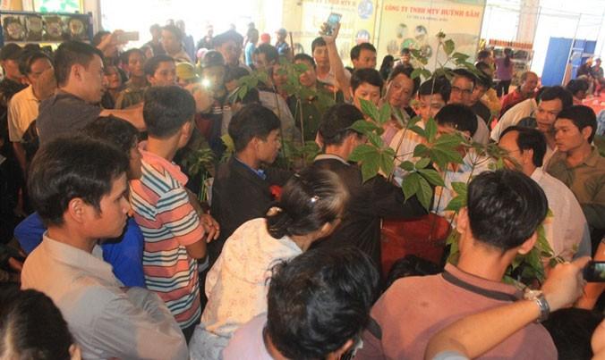 Ve thu phu sam Ngoc Linh: Noi dai gia che tien le