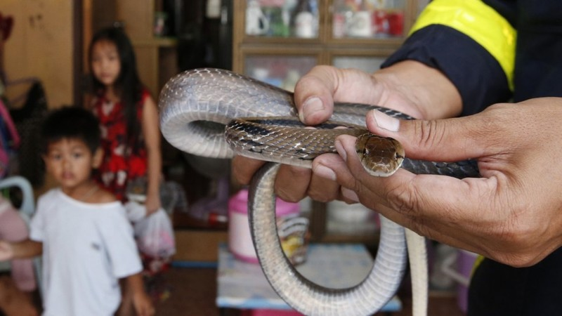 Van nan ran o Bangkok: Linh cuu hoa bat ran nhieu hon dap lua