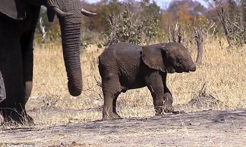 Xot xa voi con mat voi lac long trong tuyet vong tren dong co