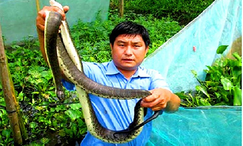 Khoanh luoi gan 2.000 con ran loang lo o Hau Giang