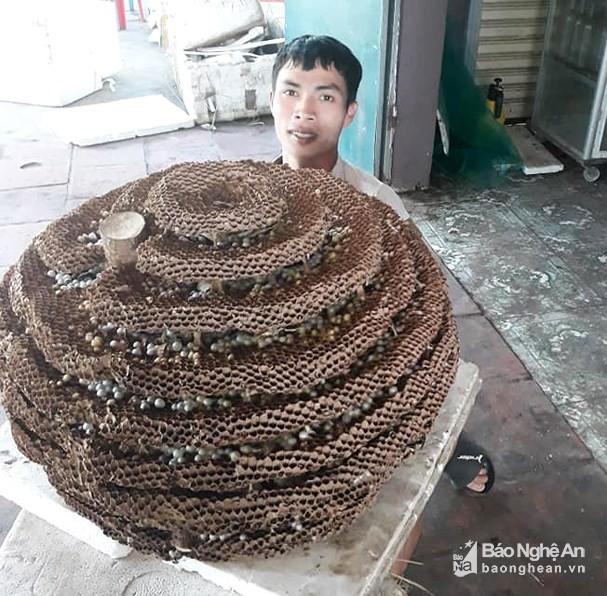 """San to ong """"khung"""" 10 tang chua tung thay o bien gioi Nghe An - Lao-Hinh-2"""