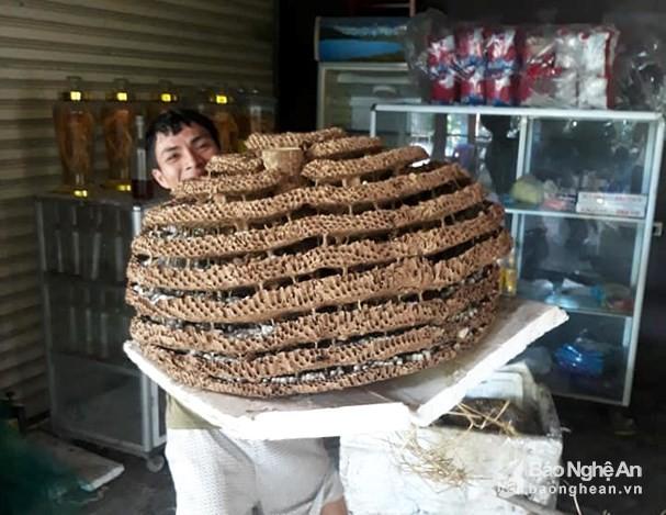 """San to ong """"khung"""" 10 tang chua tung thay o bien gioi Nghe An - Lao-Hinh-3"""