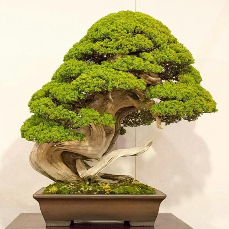 Trom len vao vuon bonsai 5.000 ha, trom 7 cay quy gan 3 ty dong