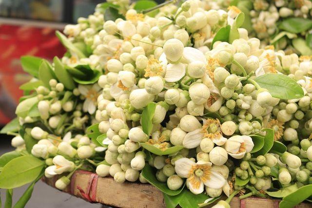 Sau Tet, dan Ha thanh choi hoa que thom lung nua trieu/kg-Hinh-2