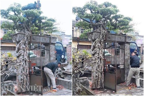 Xon xao Nam Dinh: Cay sanh co ban kem cong nha gia 6.000 USD?