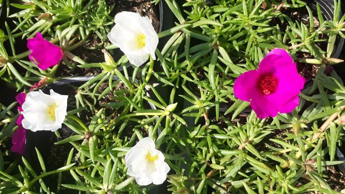 La doi hoa muoi gio no hoa ca ngay khong