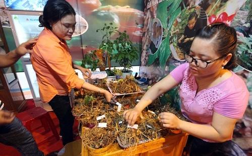 Mang 60kg sam Ngoc Linh ra cho ban, thu ngay 4 ty dong-Hinh-2