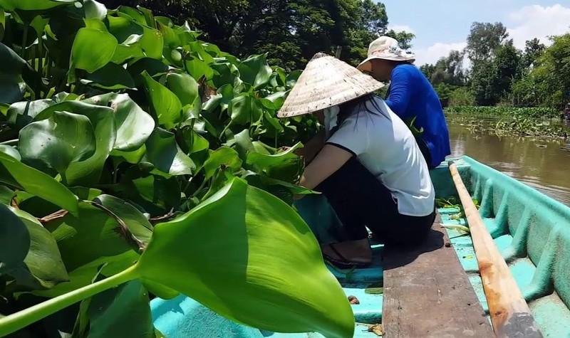 Chuyen la Hau Giang: Dan bo rau nhut quay ra trong... beo dai