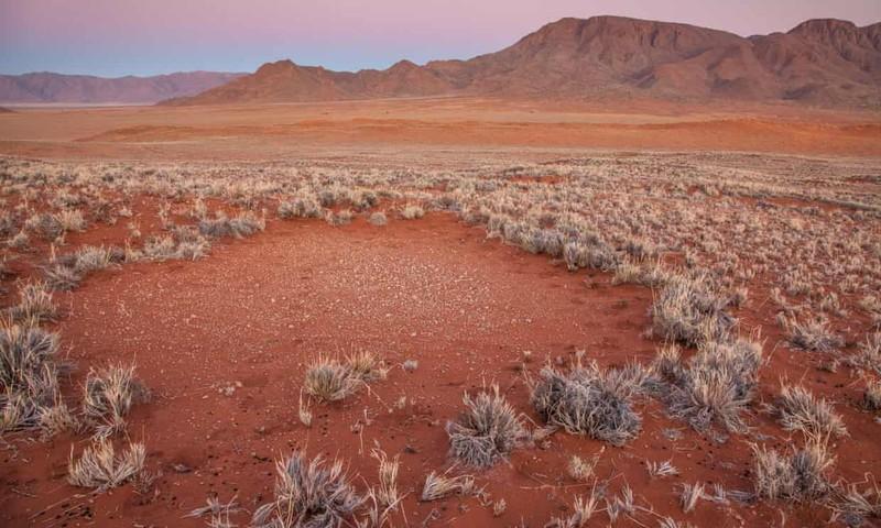 "Giai ma bi an ve nhung ""vong tron co tich"" ky la o Namibia-Hinh-2"