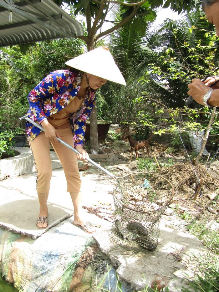 Hau Giang: Nuoi ca tre vang xuc ban 45 tan, loi toi 800 trieu-Hinh-2