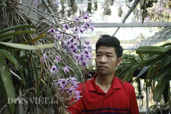 'Dot nhap' vuon lan rung tri gia 10 ty o tinh Lai Chau-Hinh-2