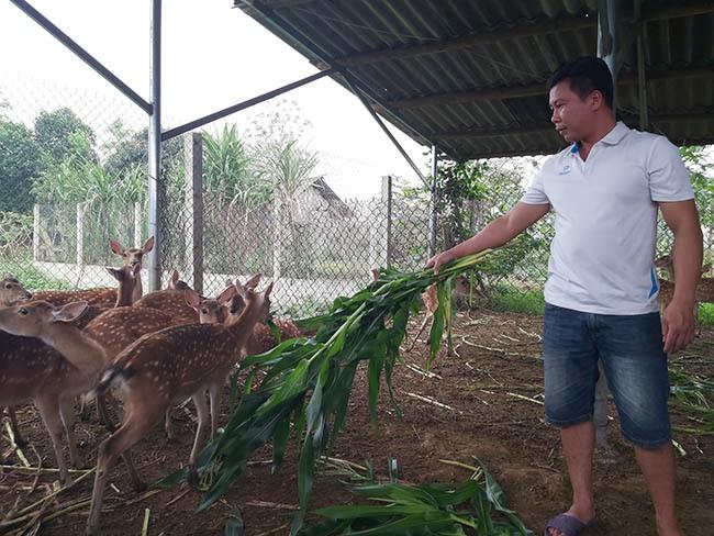 Ky su bo luong cao ve nuoi con dac san cua sung lam thuoc bo
