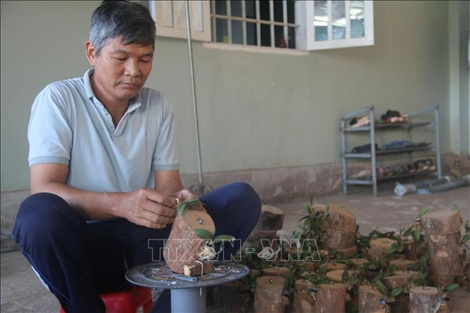 Trong vuon lan van goc, lao nong thu lai 5 ty moi nam