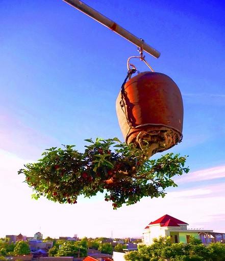 Ngam dan bonsai moc nguoc cuc doc la cua lao gan xu Quang-Hinh-11