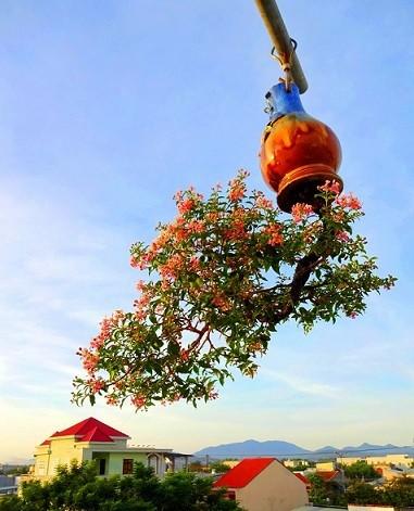 Ngam dan bonsai moc nguoc cuc doc la cua lao gan xu Quang-Hinh-4