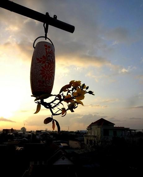 Ngam dan bonsai moc nguoc cuc doc la cua lao gan xu Quang-Hinh-9