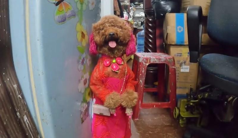 Phat cuong co cho di bang 2 chan o Binh Duong-Hinh-4