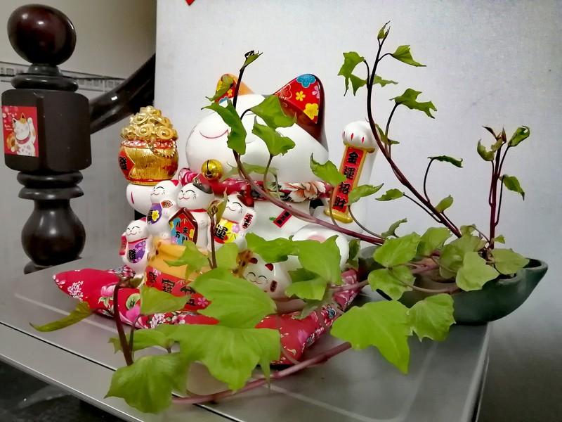 Bien cu khoai lang thanh bonsai, lam dep nha an tuong-Hinh-5