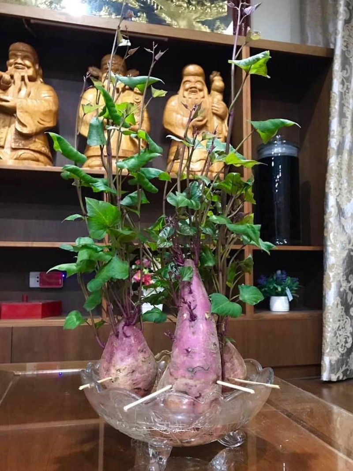 Bien cu khoai lang thanh bonsai, lam dep nha an tuong-Hinh-7