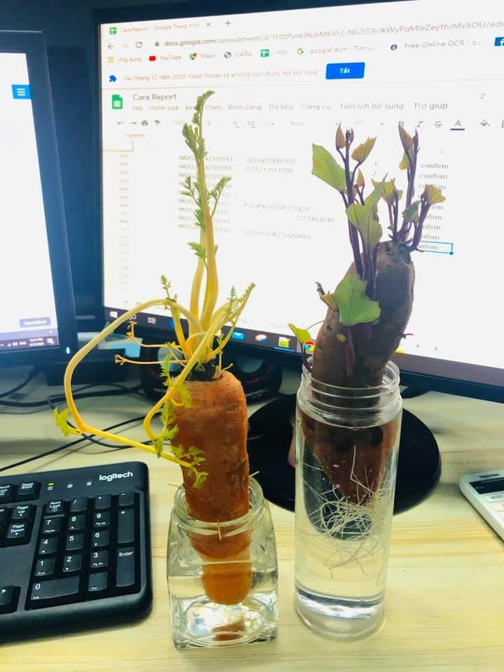 Bien cu khoai lang thanh bonsai, lam dep nha an tuong-Hinh-9