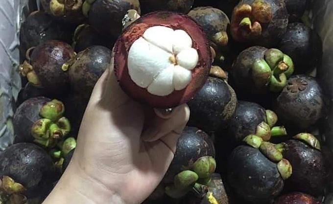 Phan biet mang cut Viet Nam va mang cut Thai Lan