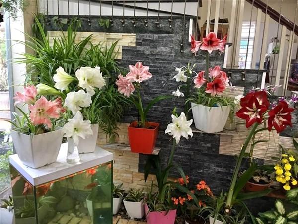 Ngoi nha ngap tran sac hoa lung linh cua ca si Bich Phuong-Hinh-4
