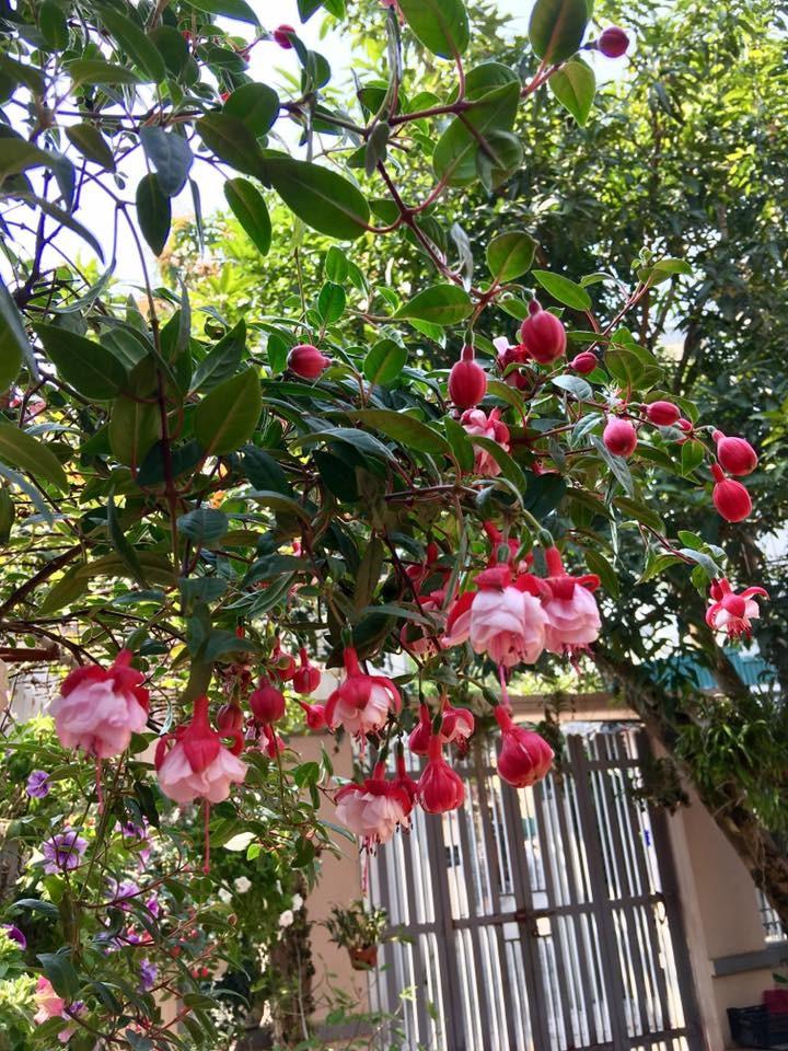 Ngoi nha ngap tran sac hoa lung linh cua ca si Bich Phuong-Hinh-5