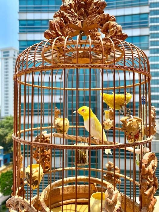 Chim 'Bach Vuong moi hong', dai gia tra 500 trieu khong ban-Hinh-6